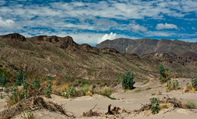Chihuahuan Desert CHIHUAHUA